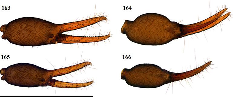 Figs-163-166-(G_deceptor-Chela-1)