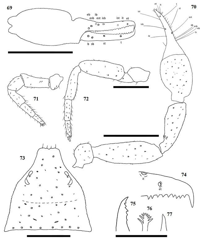 Figs-69-77-(A_impressus-Diagrams)