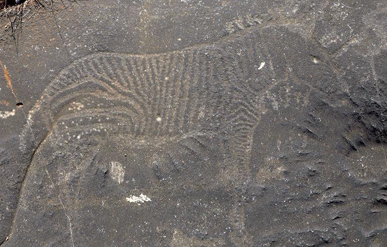 Hartmanns-mountain-zebra