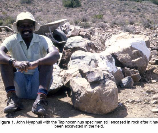 Tapinocaninus returns home